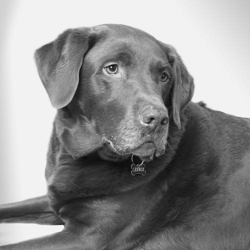 Lennox - Hund